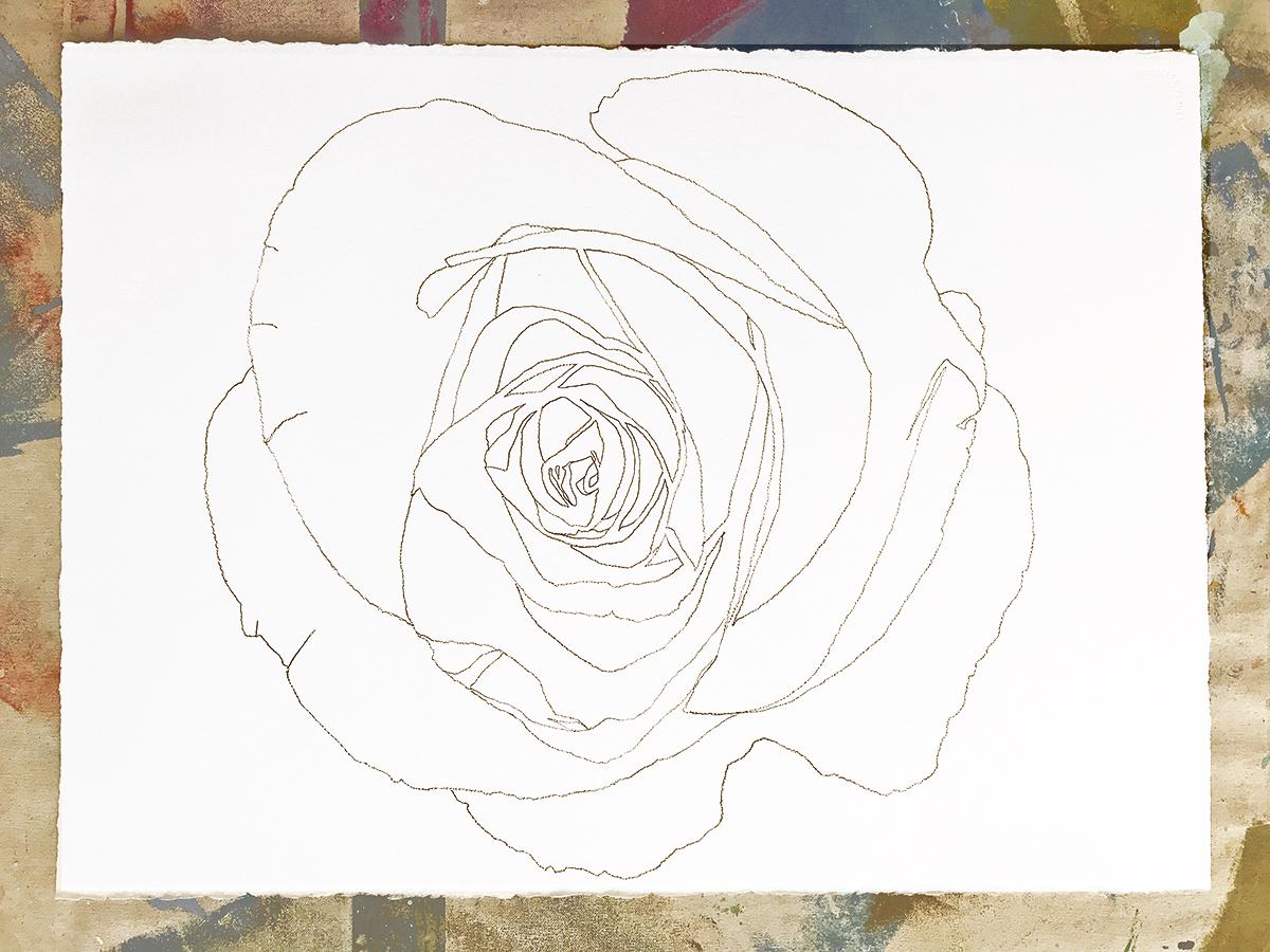 heidi carlsen rogers flower drawing