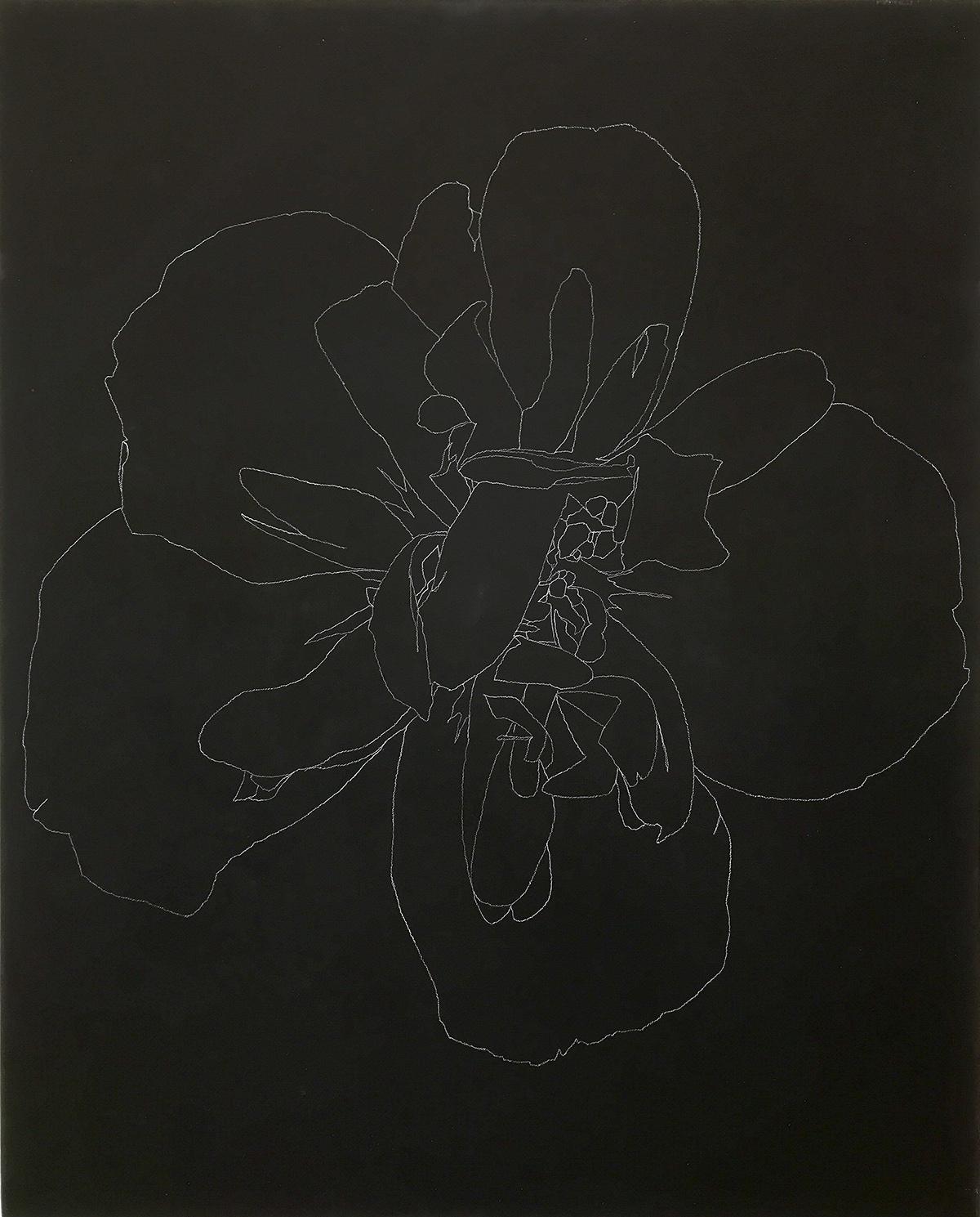heidi carlsen rogers contour flower drawing black