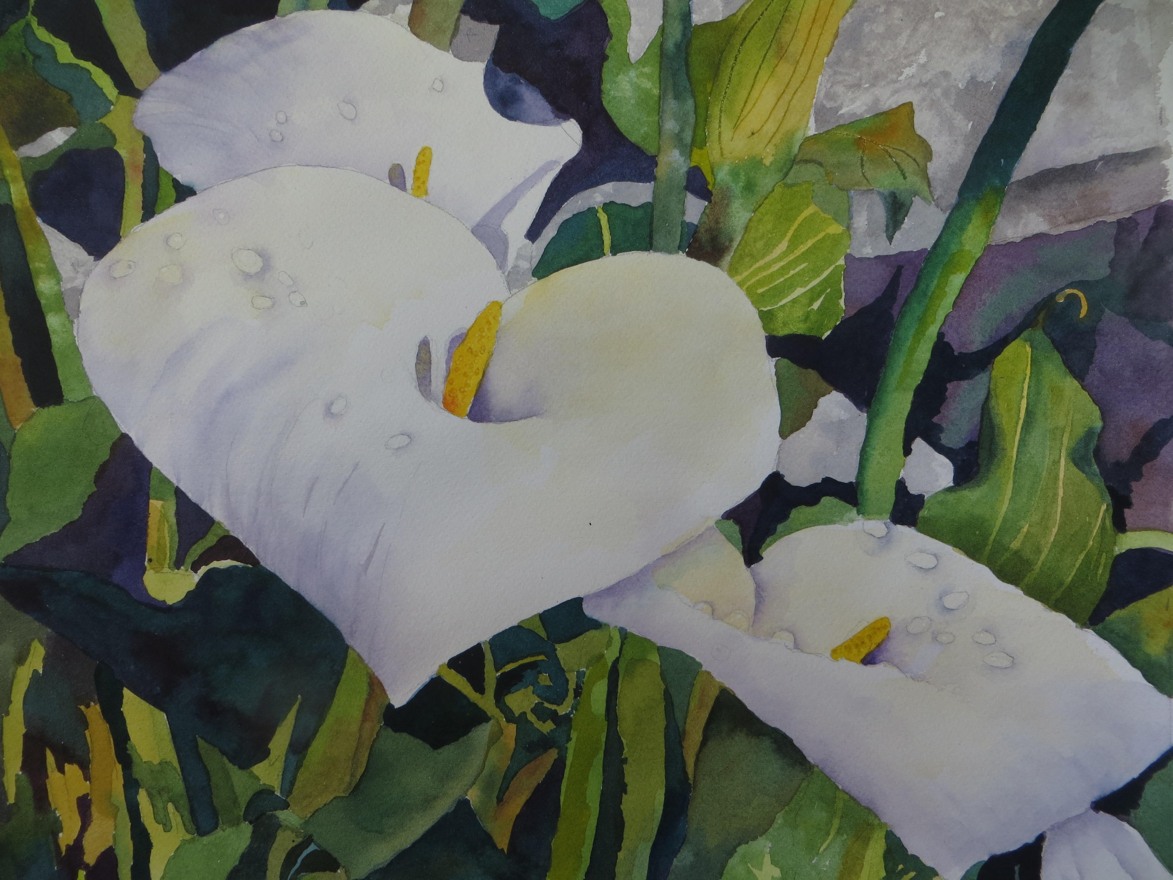 Irish Cala Lilies